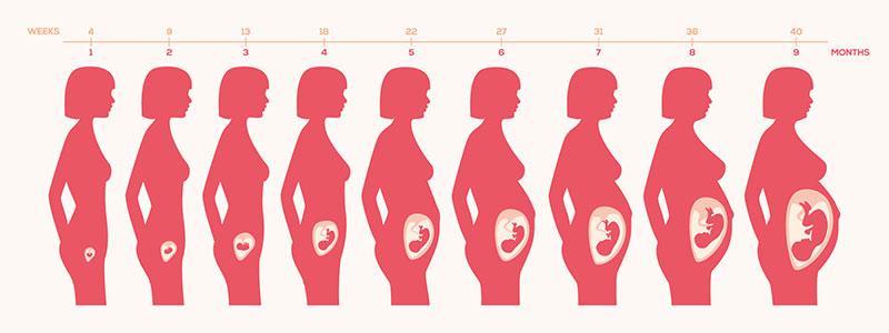 מעקב הריון